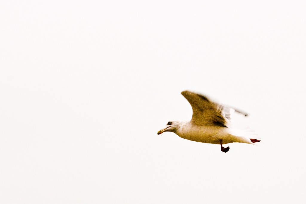 seagull flying in the dead of night